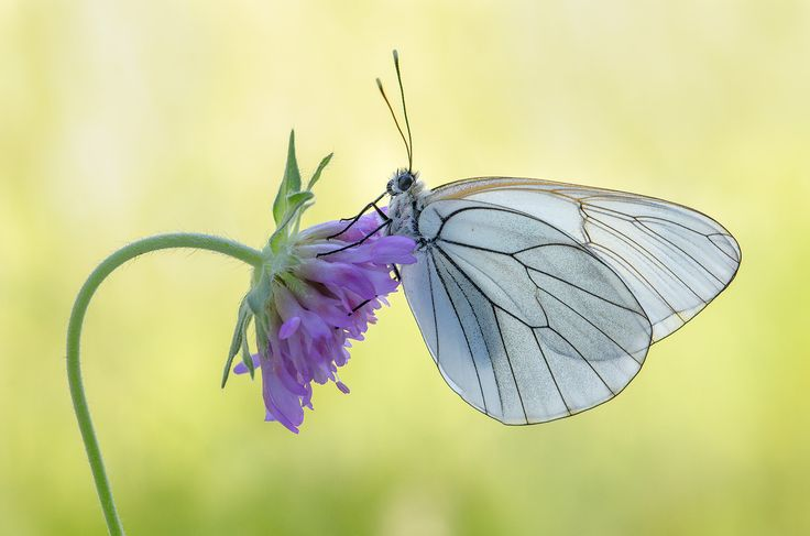 Symbols and Facts in the Butterfly World